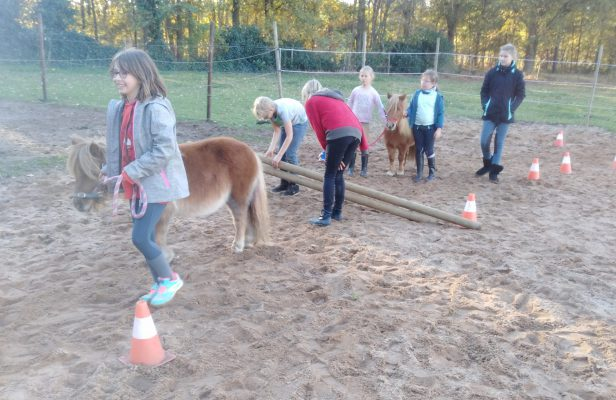 paardencoaching 2